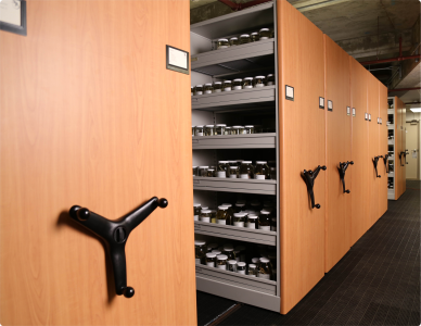 We can store virtually anything in our storage systems.